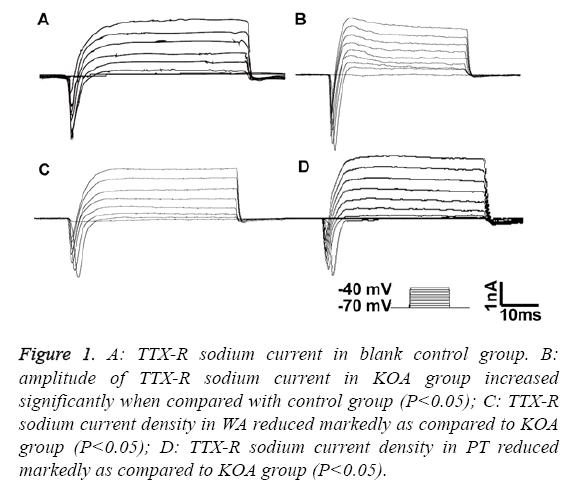 biomedres-sodium-current