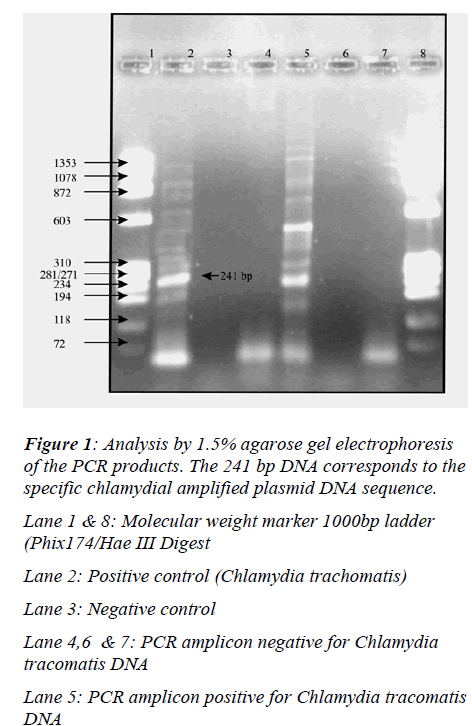 biomedres-specific-chlamydial-amplified-plasmid