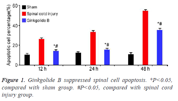 biomedres-spinal-cell-apoptosis