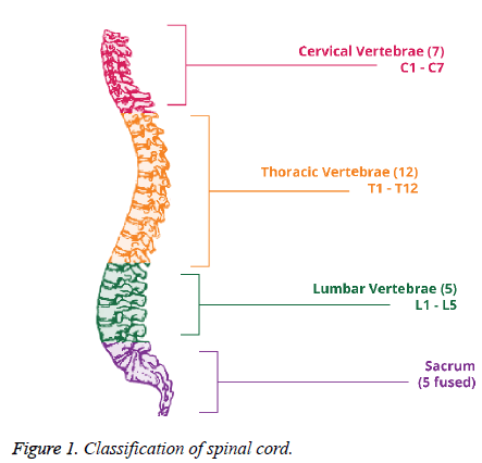 biomedres-spinal-cord