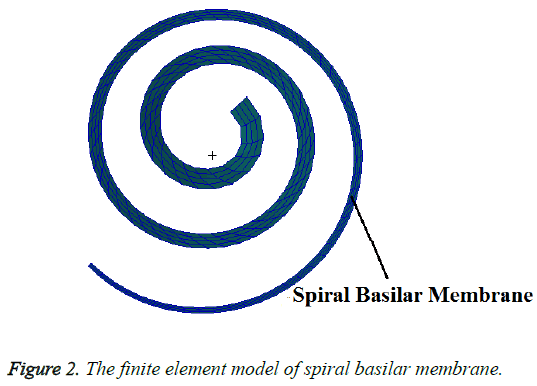 biomedres-spiral-basilar
