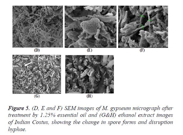biomedres-spore-forms