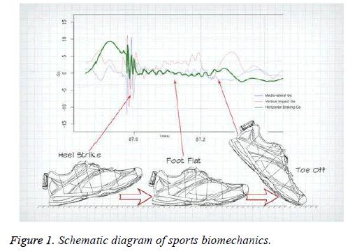 biomedres-sports-biomechanics