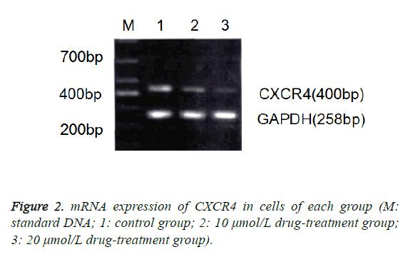 biomedres-standard-DNA