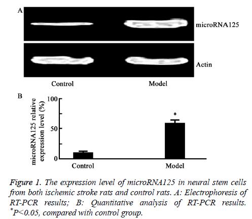 biomedres-stroke-rats