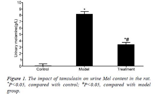 biomedres-tamsulosin-rat-model