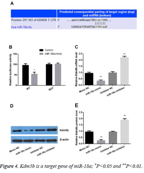 biomedres-target-gene