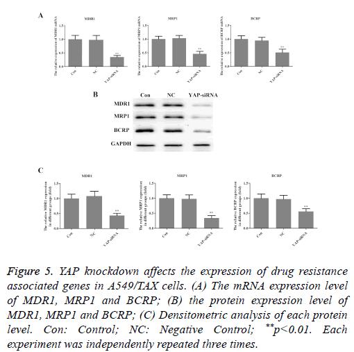 biomedres-taxol-cytometry