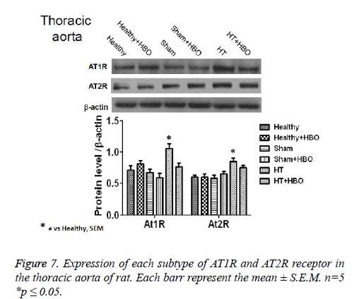 biomedres-thoracic-aorta-rat