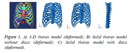 biomedres-thorax-model