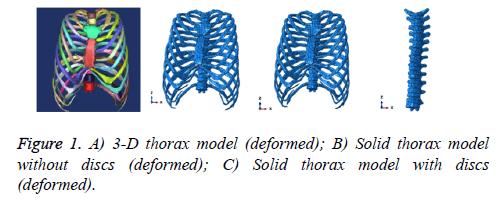 biomedres-thorax-model