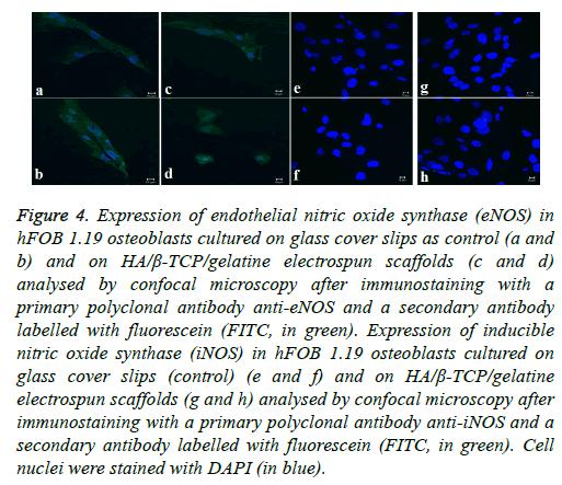 biomedres-tissue-culture