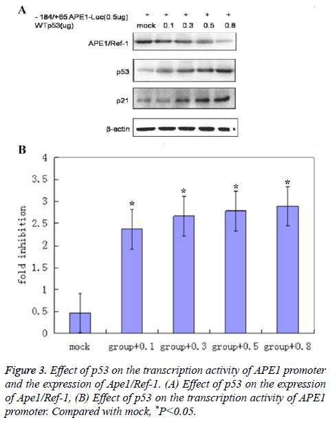 biomedres-transcription-activity