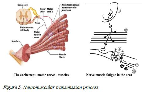 biomedres-transmission-process