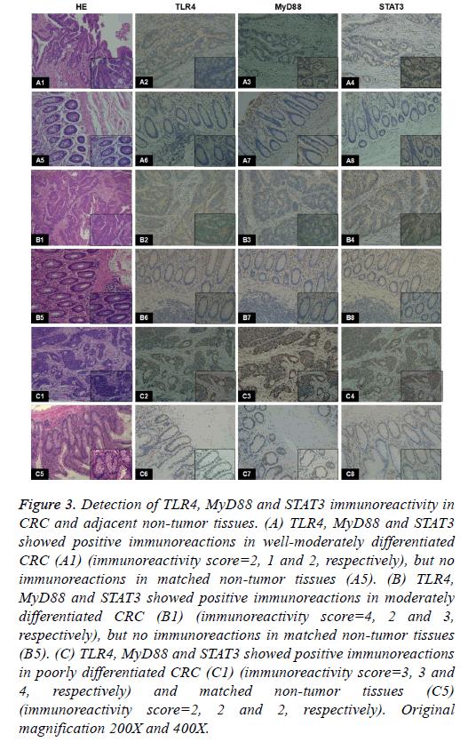 biomedres-tumor-tissues