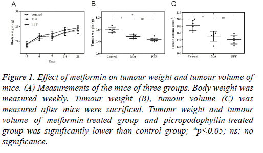 biomedres-tumour-weight