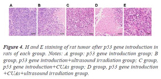 biomedres-ultrasound-irradiation