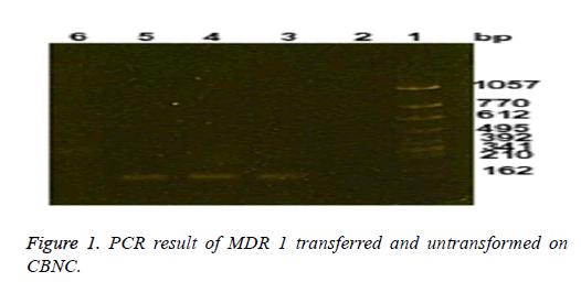 biomedres-untransformed-CBNC