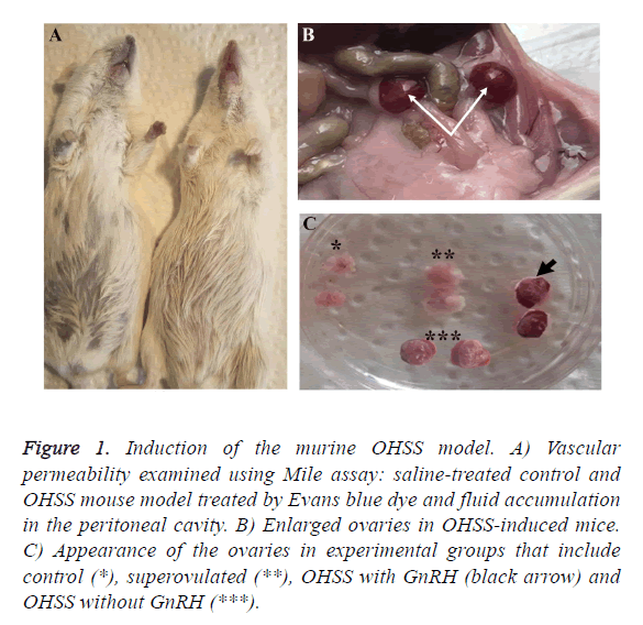 biomedres-vascular-permeability