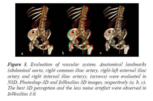 biomedres-vascular-system