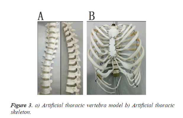biomedres-vertebra-model