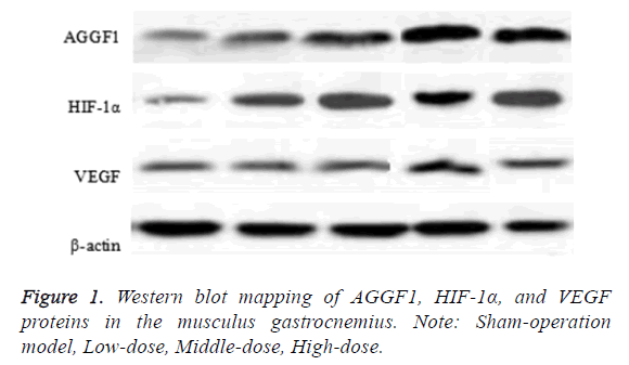 biomedres-western-blot-mapping